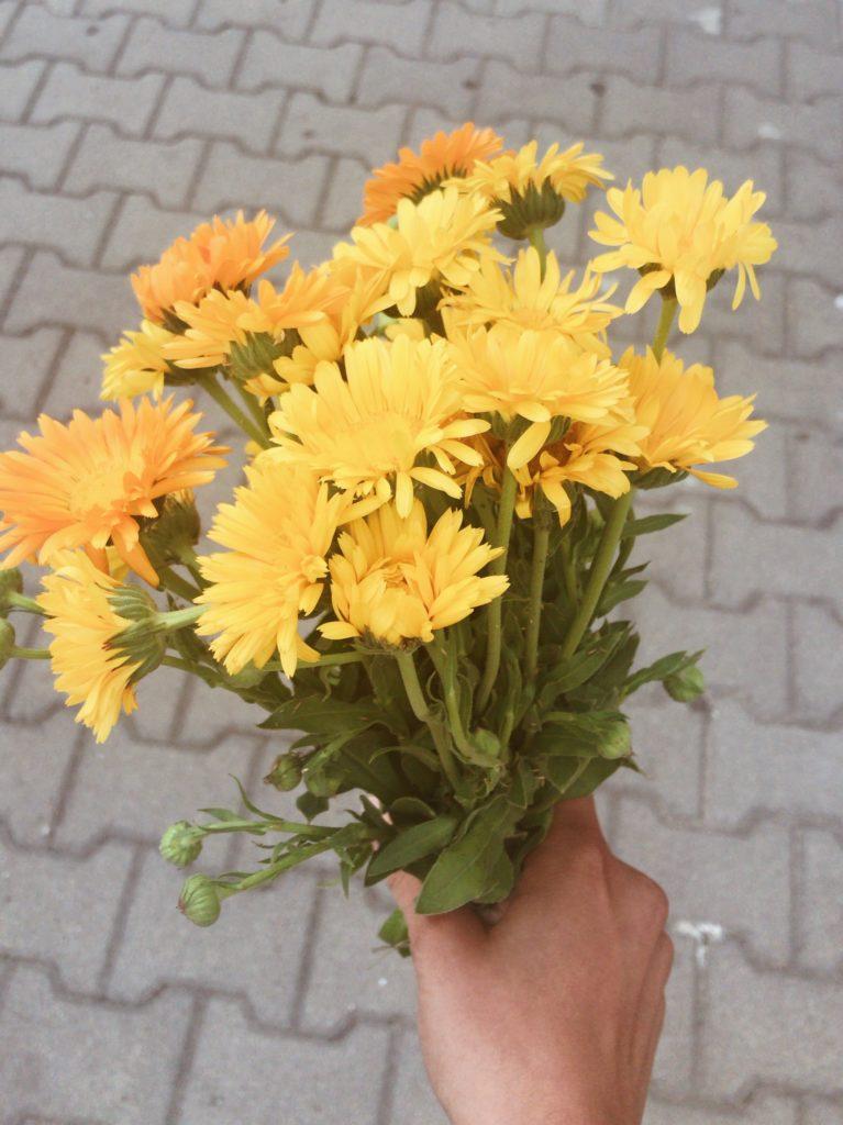 kwiatuszki od babuszki